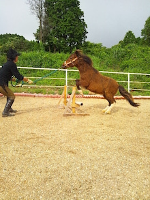 $馬を愛する男のブログ <br /><br /><br /><br />              <br /><br /><br /><br /><br /><br /><br /><br /><br /><br /><br />href=