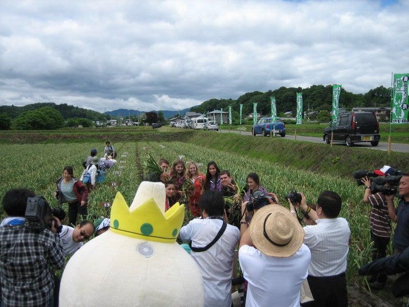 田子町はにんにくの収穫時期です...