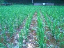 東京都武蔵村山市で農業始めます。<福笑い農場のブログ>-SN3L0299.jpg