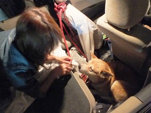 岡山の迷子犬・ヨーコちゃんを探せ!