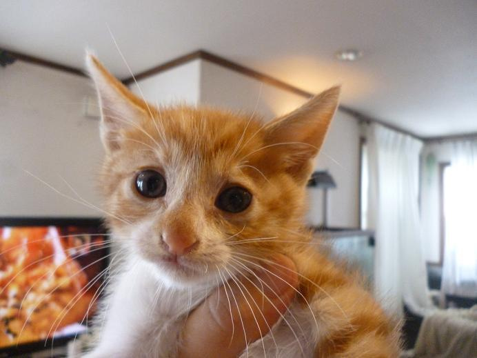 Tomte Crest  犬猫達との生活と関西フルーツサンド♪