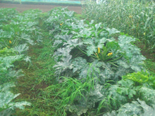 東京都武蔵村山市で農業始めます。<福笑い農場のブログ>-SN3L0305.jpg