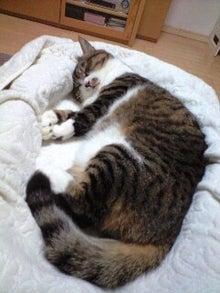 ずれずれブログ…湘南で猫と暮らせば…-CA390968-0001.JPG