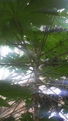 吉祥寺税理士 起業・会社設立・野菜ソムリエ ◆将軍への坂道◆ 武蔵野市(吉祥寺・三鷹)の税理士事務所で頑張る野良うさぎの青雲ブログ