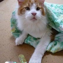 洗濯したお布団ってい…