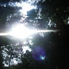 * 金さな神社で沢山の光とともに・・・夏越の払いの画像