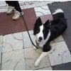 高崎市 前橋市 犬のしつけ 合同訓練の画像
