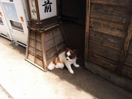 スーパーB級コレクション伝説-takao20130627
