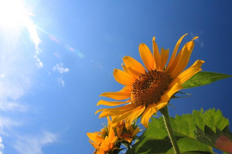 「夏休み 画像 フリー」の画像検索結果