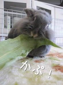 Bunny's Kitchen(バニーズキッチン)  ♪**うさぎの台所**♪