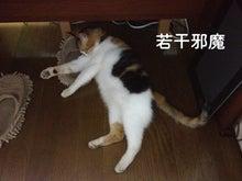 $猫白血病 闘病記-ミケさん足元