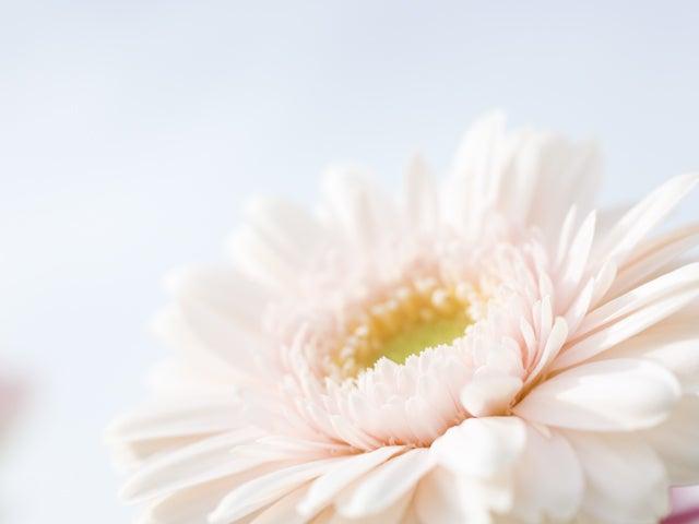 ヒプノセラピー催眠療法大阪神戸奈良京都福井・スクール資格