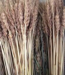 パン工房フローベル-小麦