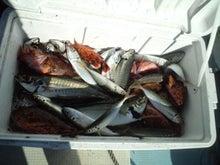 玄海灘のアジ釣りとアラカブ釣りの画像