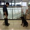 伊勢埼市 本庄市 ドッグトレーニング グッドワンの画像