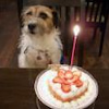 当店の非常勤 看板犬のクララさんの画像