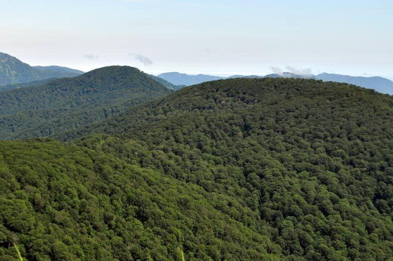 $白神山地ツアーの白神なびスタッフブログ-2013年7月中旬の白神山地「二ツ森」7