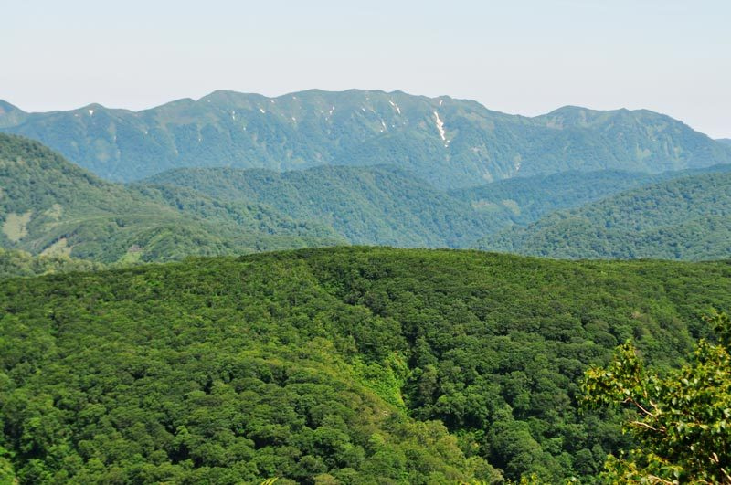 $白神山地ツアーの白神なびスタッフブログ-2013年7月中旬の白神山地「二ツ森」6