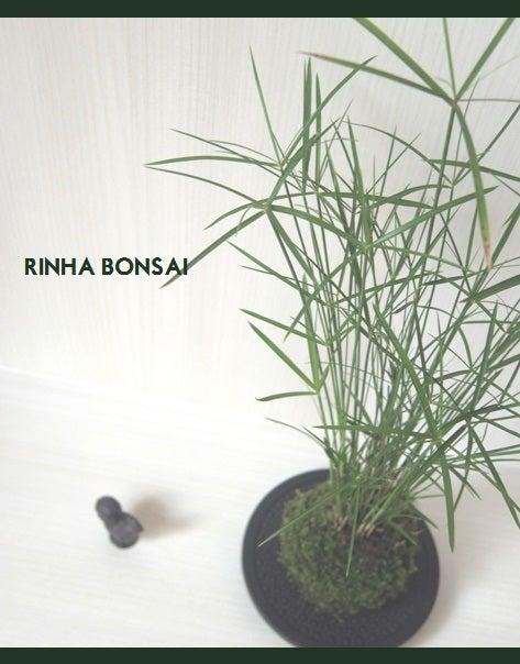 bonsai life      -盆栽のある暮らし- 東京の盆栽教室 琳葉(りんは)盆栽 RINHA BONSAI-琳葉盆栽 苔玉 インテリア