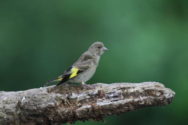 keiboの写真ブログ 素晴らしき野鳥たち