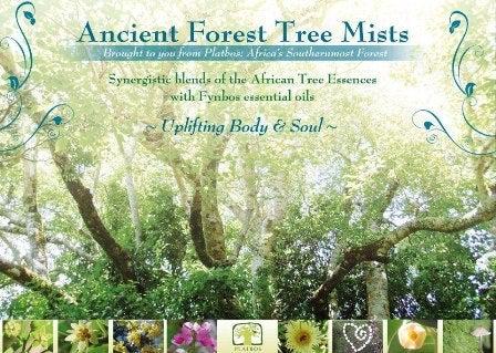 アフリカンツリー神秘の森のミスト