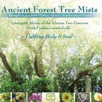 """""""第2回 〈聖なる太古の森〉アフリカンツリーミスト体験会募集""""の記事に添付されている画像"""