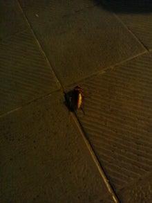 $素敵やん-ゴキブリ