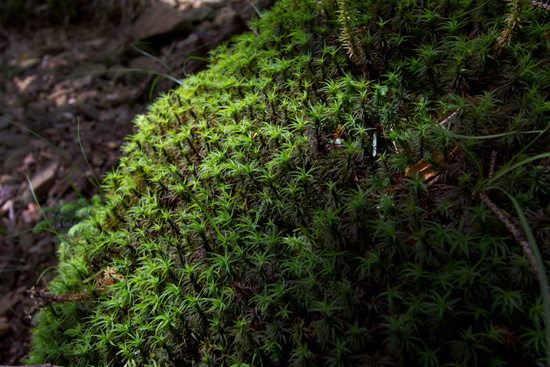 the blog of  kenshin-photo.com-苔 moss