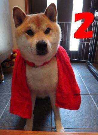 柴犬ジンのブログ-45