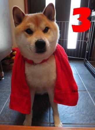 柴犬ジンのブログ-5