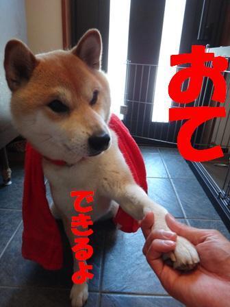 柴犬ジンのブログ