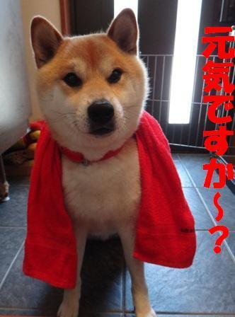 柴犬ジンのブログ-1