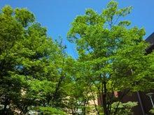 $松尾祐孝の音楽塾&作曲塾~音楽家・作曲家を夢見る貴方へ~-真夏のキャンパス風景5
