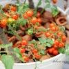 夏庭といえば夏野菜の画像
