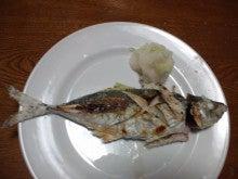 釣り物の真アジの塩焼き