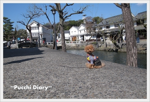 **Pucchi Diary**