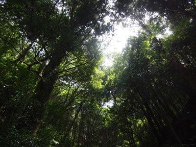 ルナシャイン・輝☆ブログ-天城隧道1