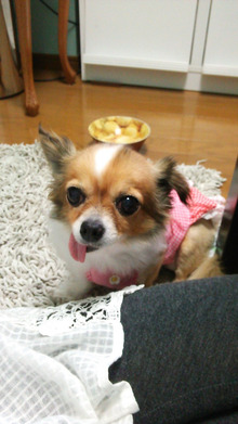 Happy Paws預かり日記-DSC_0422.JPG