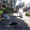 前橋市 渋川市 ドッグトレーニング 合同訓練の画像