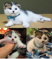 ぶにゃにゃんこ~ぶーにゃんの猫的生活~