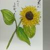 向日葵会ではがき絵(絵手紙)描きました・・・・・・No.76の画像