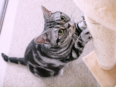 マロンの物語 feat.猫カフェ Cats-あめちゃん