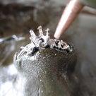 婚約指輪 エンゲージリングのダイヤモンドセッテイングの風景 京都府 奈良県の指輪屋さんの記事より