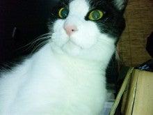 桂米紫のブログ-SBSH0001.JPG