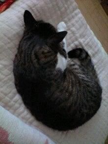 ずれずれブログ…湘南で猫と暮らせば…-130730_1432~0001.jpg