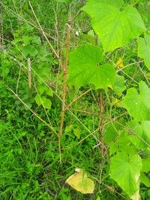 炭素循環農法と自然農法組み合わせてやりたいな~~-DSC_0374.JPG