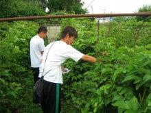 館林ボイセンベリーのブログ-収穫体験01