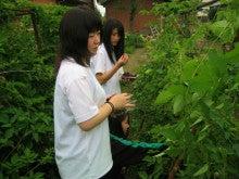 館林ボイセンベリーのブログ-収穫体験02