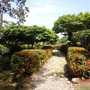 植物園の日本庭園