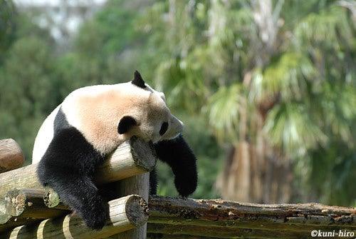 我ら浪速の動物園児ィ~!! -動物写真ブログ--だらだら。
